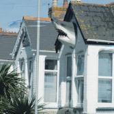 Der Englische Hai