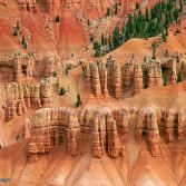 Hoodoos (Cedar Breaks, USA)