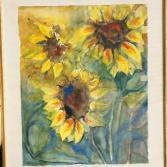 Sonnenblumen im Felde