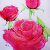 Sunday roses