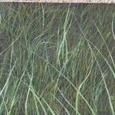 Nur Gras ( Acryl)