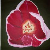Tulpenblüte   40x40