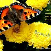 061 Schönheit und Lebendigkeit