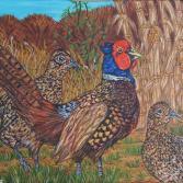 Fasan beim Maisfeld