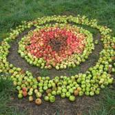 Muster aus Äpfeln verschiedener Reifestadien