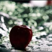 Apfelstudie I