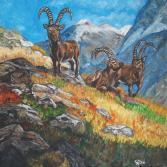 Steinböcke auf der Alp