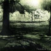 Silence in the forest II