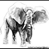 Tuschebild Elefant