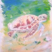 Wasser-Schildkröte - Turtle