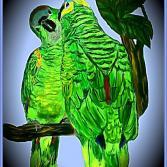 Papageienliebe Vignette 1.