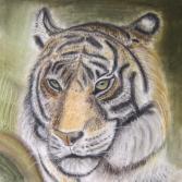 Tigerkopf (nach Vanessa Tunecke)
