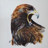 schreiender Adlere