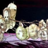 Judas-Silberling (Lunaria annua)