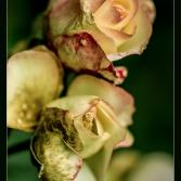 Die letzten Blüten......