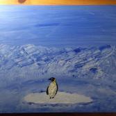 Pinguin auf Eisscholle