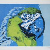 Papagei 1 (Farbvariante 1)