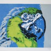 Papagei 1 (Farbvariante 2)