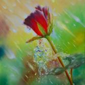 The rose in the rain