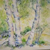 Birken im Licht