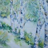 Birken am Fluß