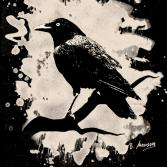 Crow (bleached look, crème white)