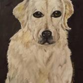 Chrissi's Dog