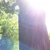 Schutzbaum