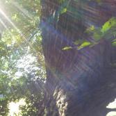 Schutzbaum.jpg