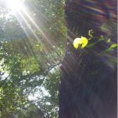 Regenbogenlichtenergie.png