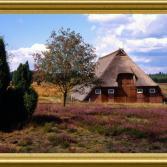 Lüneburgr Heide bei Soltau