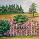 Lavendelfeld mit Bäumen