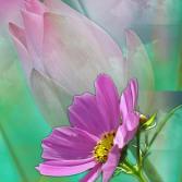 Florale Träumerei