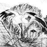 Storch auf seinem Nest...