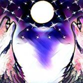 Wölfe heulen den Mond an...