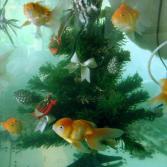 Weihnachtsbaum-Kreisverkehr im Aquarium
