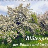 Blütenpracht der Bäume