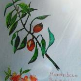 Mandelbaum, Amygdala