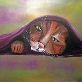Katzen unter Decke