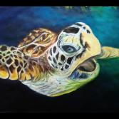 Wildlife Kleine Schildkröte