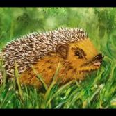 Wildlife Igel