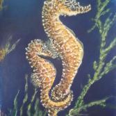 Wildlife Seepferdchen Liebe