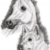 Araber & Weißer Schäferhund