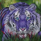 Lila Tiger