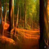Wald Rügen